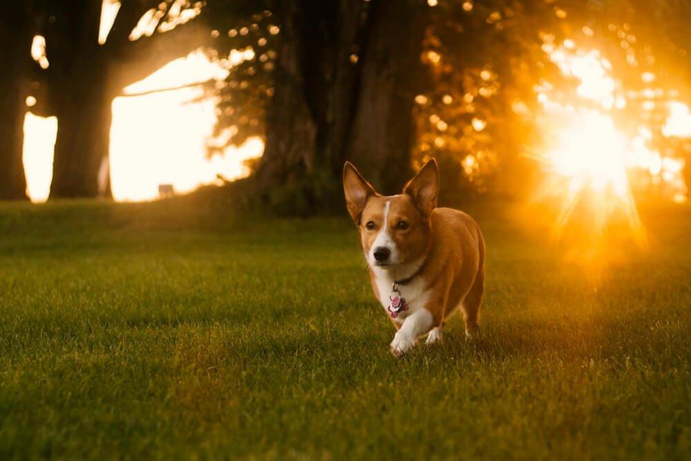 Паразиты у собак. Какие бывают виды и как помочь?